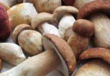 Эффективно ли лечение грибами?