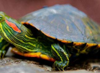Где купить аквариум для черепахи?