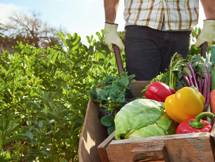 Садоводство и рецепты
