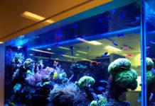 Обогреватель для аквариума