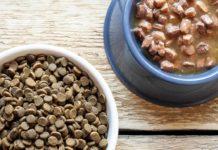 Что выбрать - сухой или влажный корм для кошек